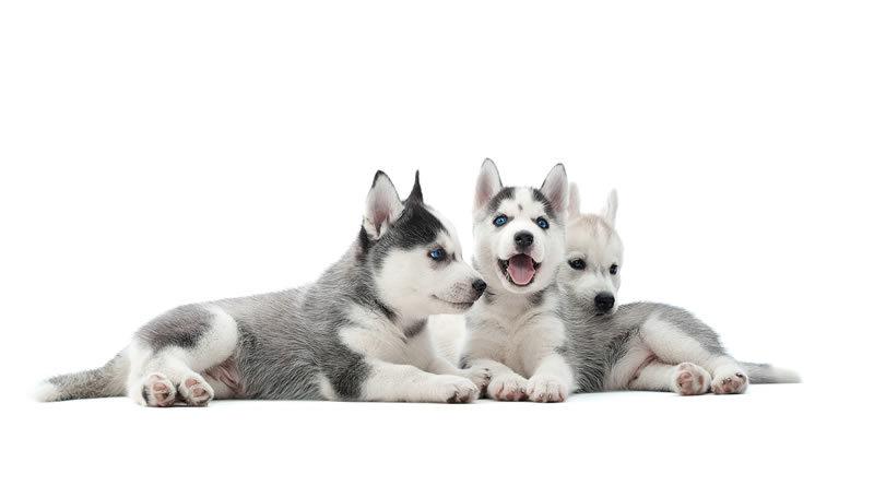 como educar a un cachorro