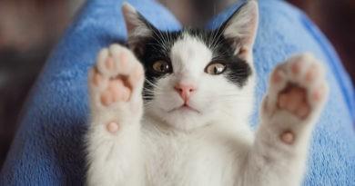 Ahuyentador De Gatos Casero
