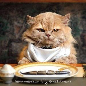 Elegir La Comida Para Gatos Adecuada
