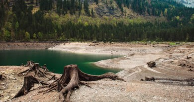 Causas Y Efectos De La Deforestación