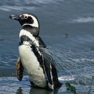 Contaminación De Plásticos En El Mar
