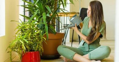 Plantas que purifican el aire de tu hogar