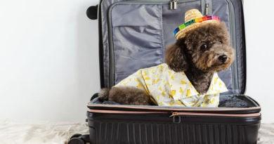 Viajar con perro en un avión