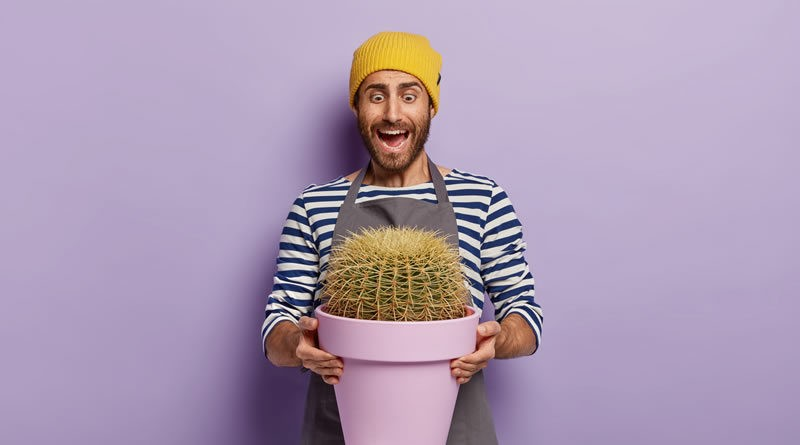 Cultivar cactus y suculentas